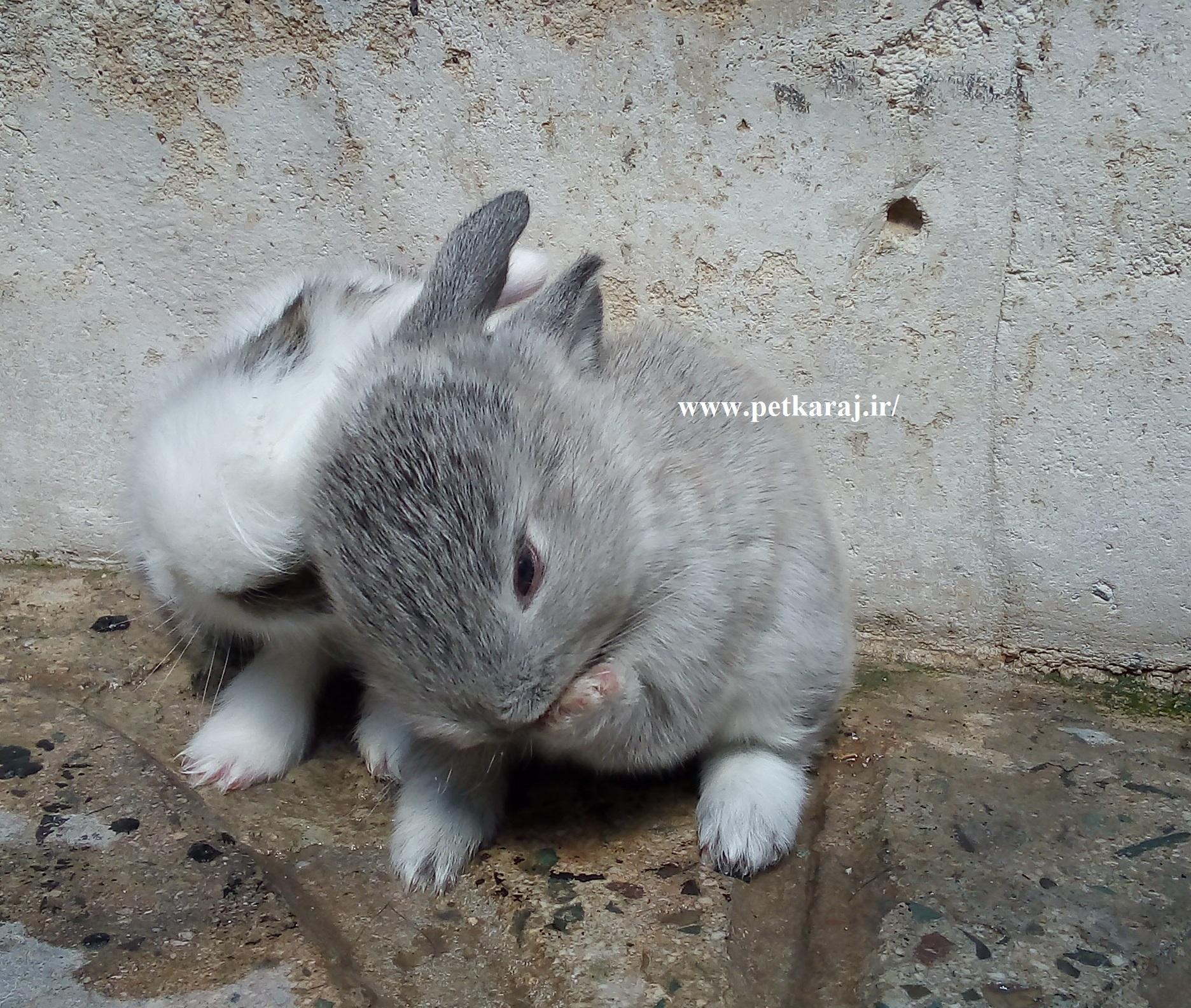 فروش بچه خرگوش ها